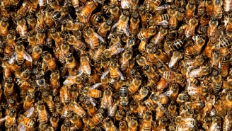 A Dark Cloud Of Bees Descended Upon Peaceful Picnickers, Sending Three To The Hospital