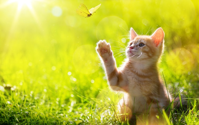 cat-hunting-butterfly_shutterstock