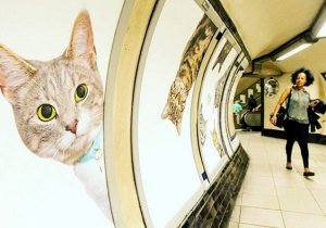 A Creative Group Raised Money To Replace All Of The Ads At A London Tube Stop With Cat Photos
