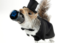 Want 55% ABV Beer Inside A Taxidermy Squirrel? This Brewery Has You Covered