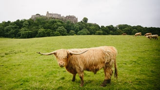 If You're On The Fence About A Trip To Scotland, This Photo Diary Will Seal The Deal