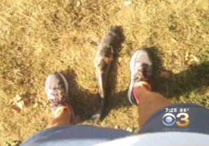 A Philadelphia Woman Was Hit In The Face By A Catfish Falling From The Sky