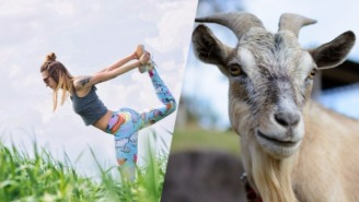 Goat Yoga Is Proof That We've Finally Reached Peak Oregon