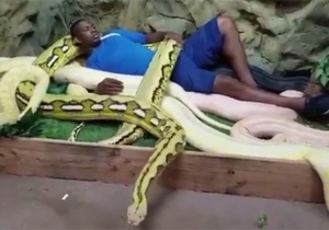 Here's The Pacers' Kevin Seraphin Cuddling With Some Gigantic Snakes For No Reason