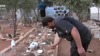 One Man Has Made It His Mission To Look After All The Cats Abandoned By Refugees Fleeing Aleppo