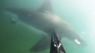 A Spearfisher Barely Escapes With His Life In This Insane GoPro Footage Of A Great White Shark Attack