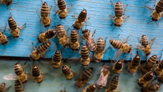 South Carolina Accidentally Killed Millions Of Bees With Pesticides While Fighting The Zika Virus