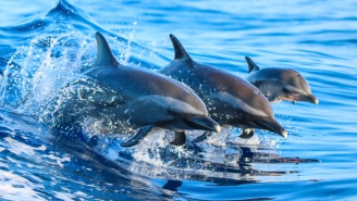 We May Be On The Verge Of Speaking To Dolphins In Their Own Language