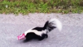 This Brave Soul Risked Getting Sprayed To Help A Skunk With A Soda Can Stuck On Its Head