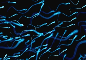 New Zealand Is Currently Experiencing A Sperm Drought. Yes, A Sperm Drought.
