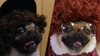 Here's What 'Stranger Things' Would Have Looked Like With An All Pug Cast