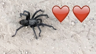 Los Angeles Residents Are Being Warned To Be On The Look Out For Amorous Tarantulas