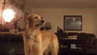 This Video Of A Golden Retriever 'Singing' Opera Might Be Your Only Sanctuary From Trump Talk