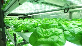 Can Hydroponics Change Everything About How We Produce Food?