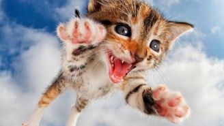 The Internet Was Made For These Kittens Photographed Mid-Pounce