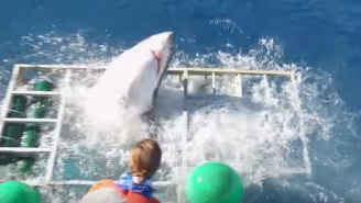 This Insane Video Of A Great White Breaking Into A Steel Cage Will Make You Rethink Taking A Shark Dive