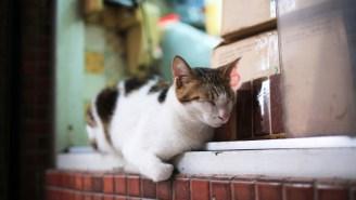 The Scientific Case For Bodega Cats