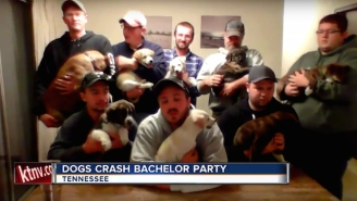 Puppies Prove To Be The Cutest Bachelor Party Crashers Ever