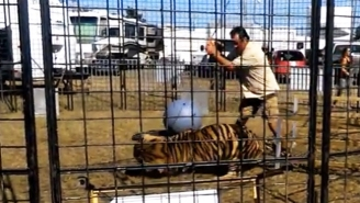 Watch The Terrifying Moment A Tiger Turns On Its Trainer, Attacking Right In Front Of Children