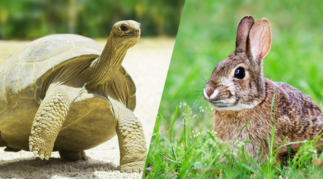 turtle-hare