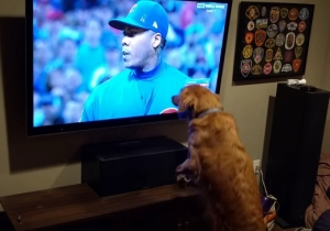 This Dog Couldn't Get Enough Of Game 7 Of The World Series