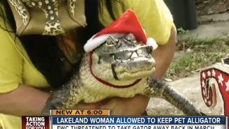 It's A Christmas Miracle! A Pet Alligator Named 'Rambo' Is Allowed To Stay With His Florida Owner