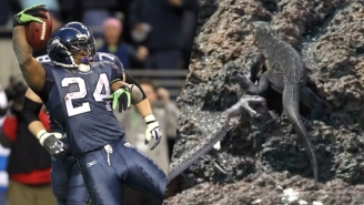 The 'Planet Earth' Iguana Goes Beast Mode By Being Mashed Up With Marshawn Lynch's Narration
