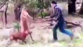 Watch This Hero Get Into A Fistfight With A Kangaroo To Protect His Dog