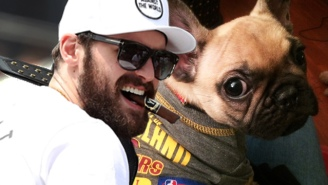 The Story Of A Dog Named Kevin Love Is Very Good And Important