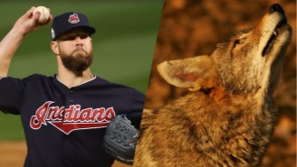Cory Kluber Hit A Coyote In The Ass With A Fastball