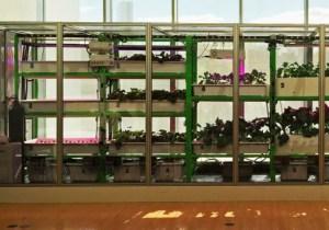 MIT's Food Computer Makes Farming As Simple As Tweeting