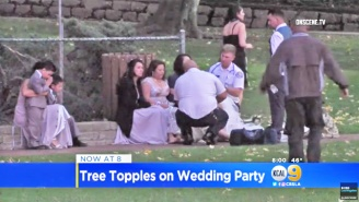 A Massive Tree Fell On A Wedding Party, Killing One Person And Injuring Several Other Guests