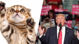 There's A Google Chrome Extension That'll Let You Replace Donald Trump With Kitten Pictures