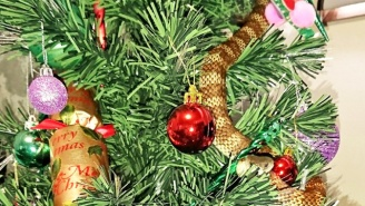 A Venomous Snake Curled Up In An Aussie Woman's Christmas Tree Like A Festive String Of Nope