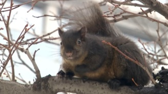 A Bunch Of Squirrels Are Terrorizing A Christmas Lights Display In Toronto