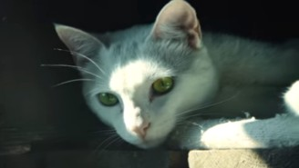 The Director Of 'Die Hard' Made His Version Of A Cat Video And It Doubles As A Game Ad