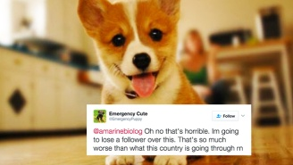 An 'Emergency Puppy' Twitter Account Is Barking Mad At The Trump Administration