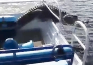 All Hell Breaks Loose When Facebook Live Catches A Florida Gator Jumping Into A Boat Full Of People
