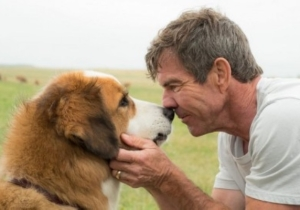 Universal Cancels The Premiere Of 'A Dog's Purpose' After Disturbing Video Of On-Set Dog Mistreatment Emerges