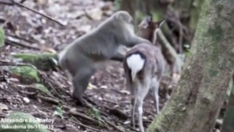 Deer And Monkeys Are Having Consensual Sex Now, According To Science