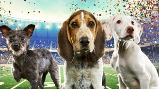 An Important Breakdown Of The Very Good Dogs In This Year's Puppy Bowl