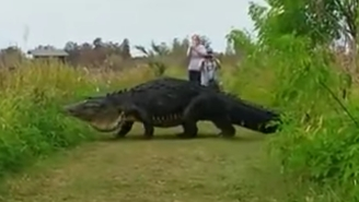 This Video Of A Colossal Alligator Is Tearing Up The Internet, But It's Gotta Be Fake… Right?