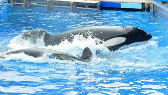 The Internet Mourns Tilikum, The Orca Subject Of The SeaWorld 'Blackfish' Documentary