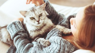 A New Study Has Found That Cats Don't Cause Mental Illness, After All, So Give That Kitty A Hug