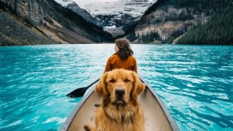 This Couple Travels The Country Taking Photos Of Their Golden Retriever