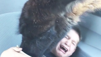 Nothing You See Today Will Be Funnier Than This Small Boy Getting 'Attacked' By A Llama