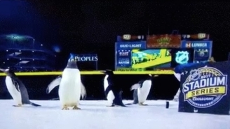 PETA And The Pittsburgh Zoo Are Beefing Over The NHL's Use Of Real Penguins