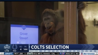Mike Mayock Got Really Mad About The Colts Announcing Draft Picks With An Orangutan