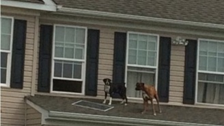 This 'Dog Party' Went Crazy Viral, And It Just Keeps Getting Better