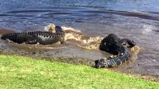 An Intense Gator Fight Turned Golfers Into Awe-Struck Spectators